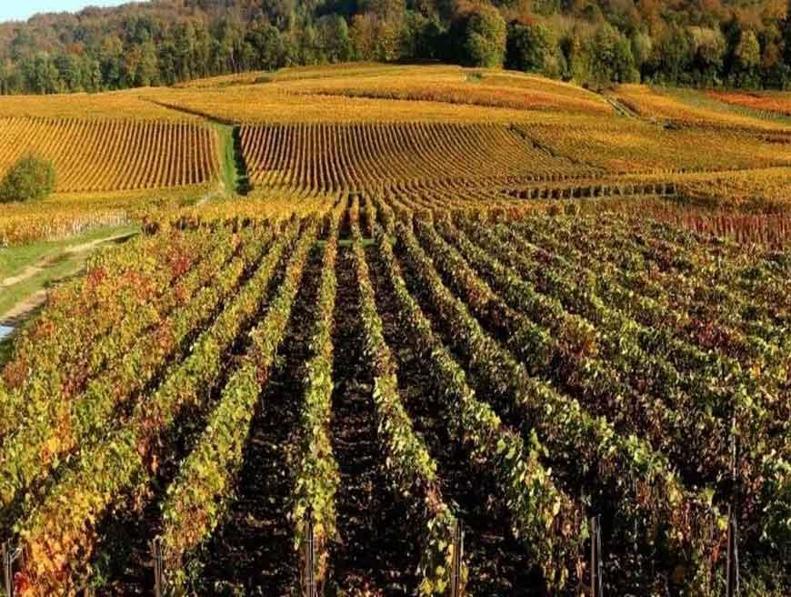 Champagne và Bourgogne: Di sản văn hóa thế giới