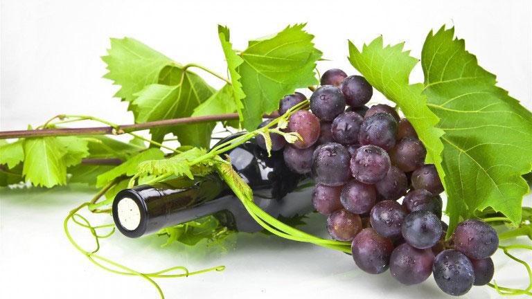 So sánh công dụng của rượu vang sim và vang nho truyền thống, Sim Thiên Sơn, Rượu Vang Sim rừng Măng Đen, Rượu Vang Sim, Rượu Sim, Rượu Vang, Vang Sim, Vang Sim Rừng, Măng Đen, Đắk Long, Kon Plông, Kon Tum