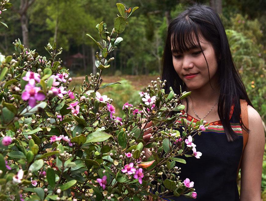 Đồi sim tím trên thảo nguyên rộng hơn 20 ha ở Quảng Ngãi