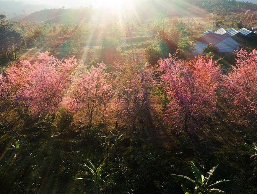 Măng Đen - Tiên nữ e ấp giữa đại ngàn xanh