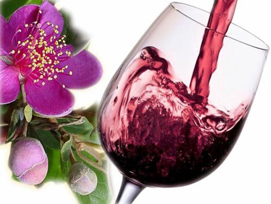 """""""So sánh"""" công dụng của rượu vang sim và vang nho truyền thống"""